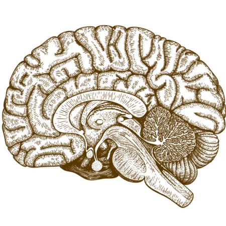 Neuroanatomie & -biologie